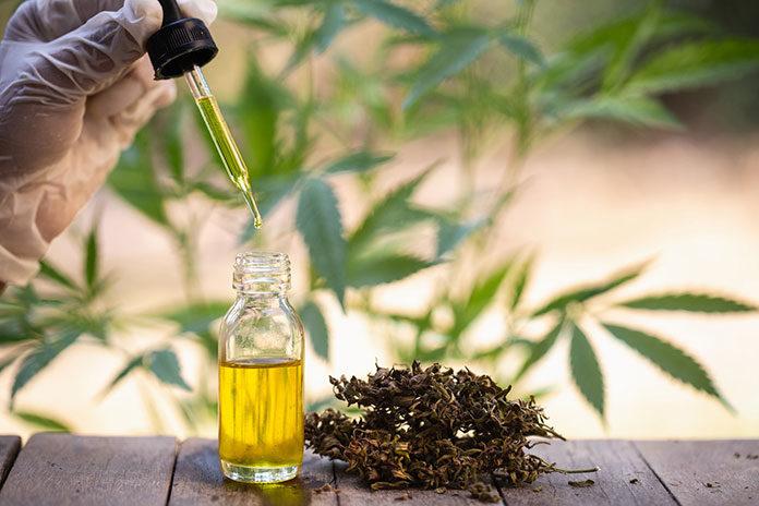 Kanadyjska rewelacja! Jak olej CBD Sequoyalife stał się pierwszym wyborem polskich konsumentów